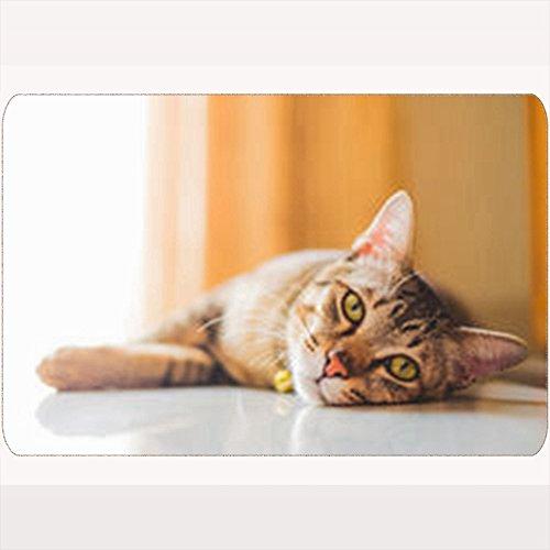 AlliuCoo Custom Welcome Doormat Thai Cat Tabby Soft Focus Animals Wildlife Vet Nature Space Floor Entrance Rug 16X24 Inches Indoor/Outdoor/Front Door Bathroom Mats Rubber Non Slip by AlliuCoo