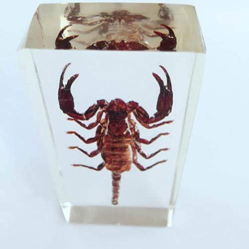 spécimen d/'insecte créatif presse-papiers collection cadeau noir scorpion b