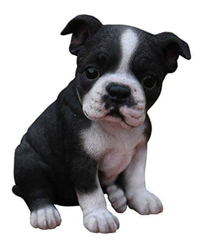 Hi-Line Gift Ltd Sitting Boston Terrier Puppy Statue (Best Of Boston Ltd)