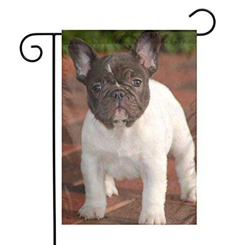 greansher White Chocolate French Bulldog Puppies Home Garden 12 X 18 Inch Decorative Colorful Welcome Garden ()
