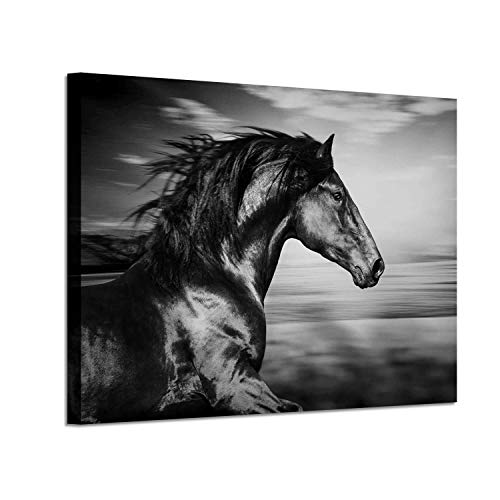 Horse Picture Animal Art Prints: Wild Black Stallion Graphic Artwork on Canvas (36'' x 24'') for Walls - Art Print Artwork