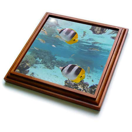 3dRose Danita Delimont - Fish - View while snorkelling, Tahaa, French Polynesia, French Polynesia - 8x8 Trivet with 6x6 ceramic tile (trv_314041_1)