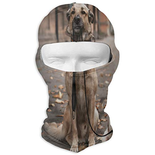 Balaclava Mixed Breed Dog And Jack Russell Terrier Walking In Autumn Park Full Face Masks UV Protection Ski Hat Womens Headcover for Cycling