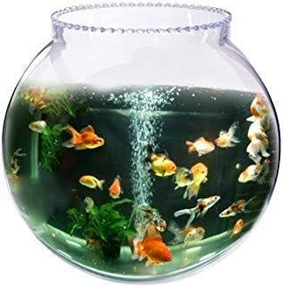 Buy Nimtel 8inch Fish Bowl Bubble Bowl And Flower Vase Online At Low Prices In India Amazon In