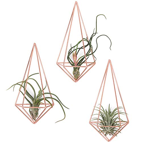Mkono Wall Mounted Air Plant Holder Modern Geometric Planter Hanging Tillandisia Container Himmeli Home Decor, Rose Gold, 3 Packs