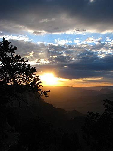 Home Comforts Canvas Print Sky Desert Night Night Sky Vivid Imagery Stretched Canvas 10 x 14 Desert Sky Cotton Print