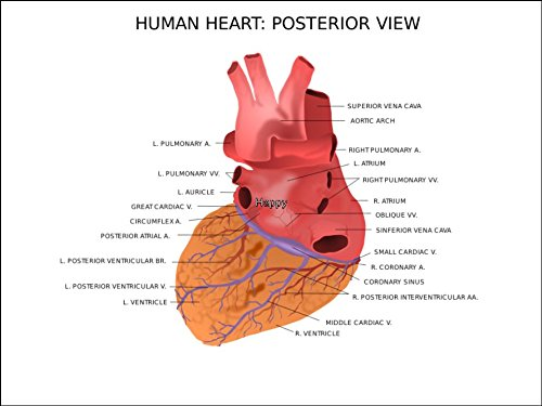 A4 Size Human Heart Anatomy Posterior View Birthday Cake Toppers