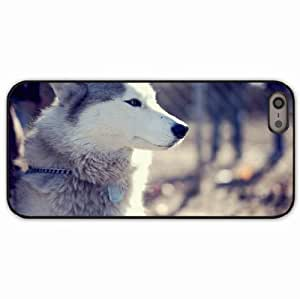 iPhone 5 5S Black Hardshell Case husky dog muzzle coat collar sit Desin Images Protector Back Cover