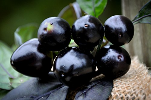 Black Pearl Hot Pepper Premium Seed Packet + More Pearl Pepper