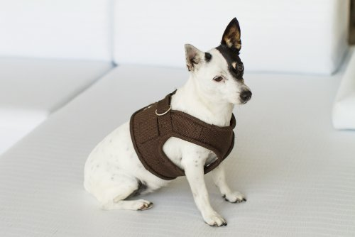 Magnetic Dog Cc Harness