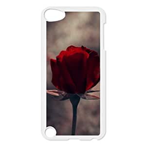 iPhone 5,5S Case,Vintage One Red Rose Macro Hard Shell Back Case for White iPhone 5,5S Okaycosama304438