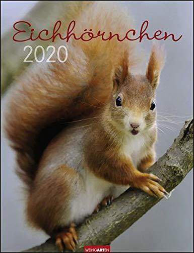 Eichhörnchen. Wandkalender 2020. Monatskalendarium. Spiralbindung. Format 30 X 39 Cm