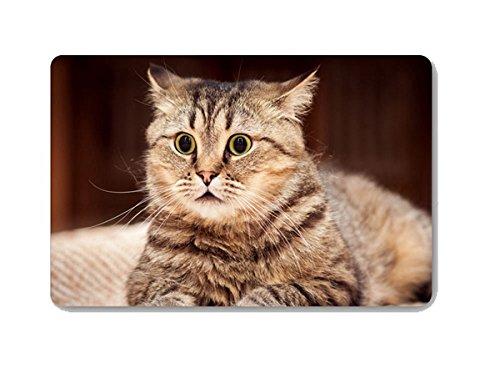[Gwein Cute Pet Cat Animal Doormat Entrance Mat Floor Mat Rug Indoor Outdoor Front Door Bathroom Mats Rubber Non Slip (23.6