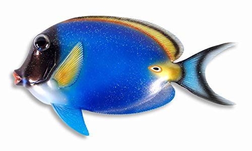 - LX Handpainted Glitter Cartoon Tropical Fish Wall Mount Decor Plaque 13