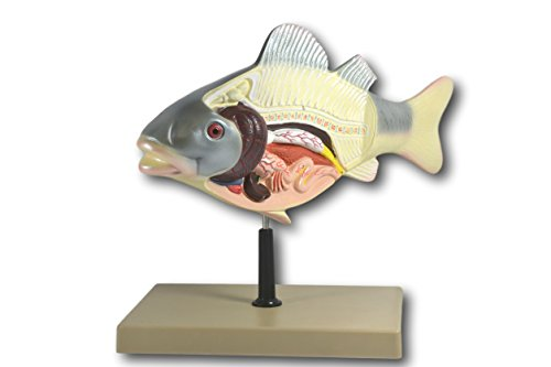 3D Fish Dissection Model, 14