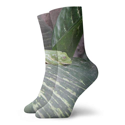 (BINGZHAO Frog Pond Casual Crew Socks,Thin Socks Short Ankle for Outdoor,Running,Athletic,Travel)