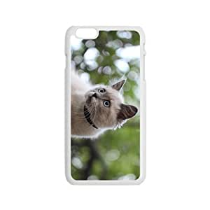 Cat Kitten Hight Quality Plastic Case for Iphone 6