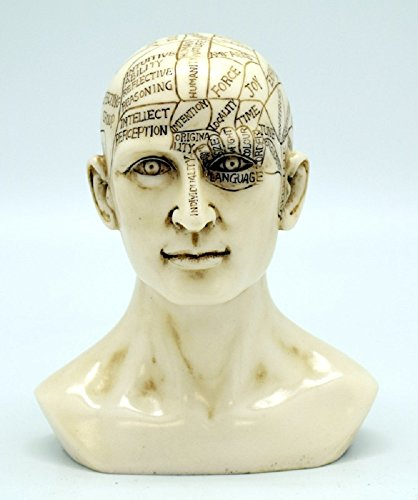 logy Human Head Skull Bust Sculpture Figurine Psychology Science Décor New ()