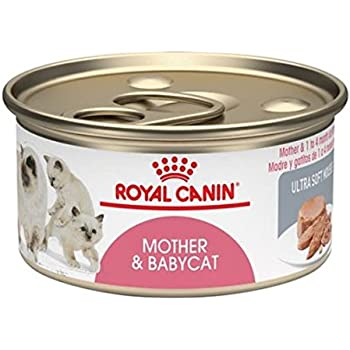 Amazon Com Royal Canin Mother Amp Babycat Ultra Soft