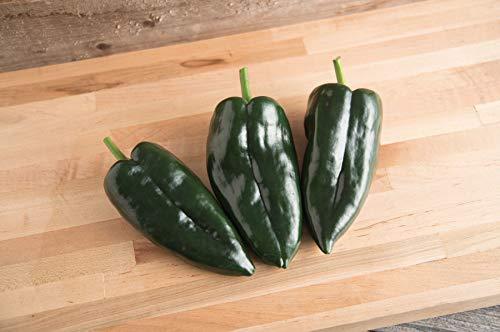 David's Garden Seeds Pepper Hot Ancho Baron 2222 (Green) 25 Non-GMO. Hybrid Seeds