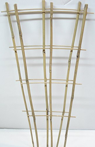 (Natural Color Bamboo Trellis 24 inches Tall - Quantity 2)