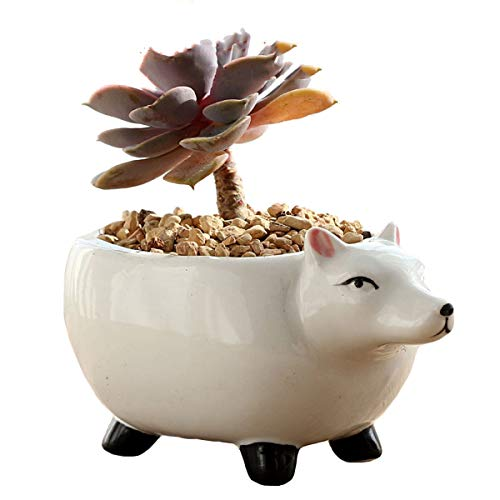 - YOURNELO Ceramic Adorable Cartoon Animals Flower Pot Succulent Planters Vase (Fox)
