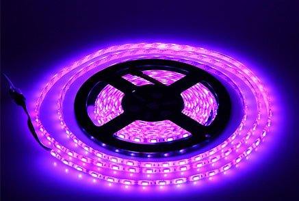 5Mm Purple Led Lights in US - 8