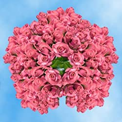 250 Fresh Cut Pink Roses for Valentine's Day | Kiko Roses | Fresh Flowers Express Delivery | The Perfect Valentine's Day Gift