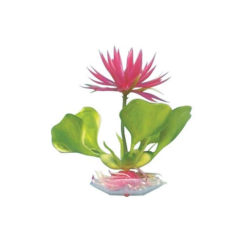 Pen-Plax P22B Water Hyacinth, 5