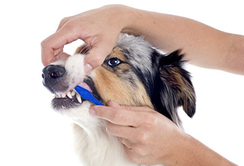 Duke's Pet Products Two-piece Dog Toothbrush Set: Double Sided Canine Dental Hygiene Brushes with Long 8 1/2 Inch Handles and Super Soft Bristles