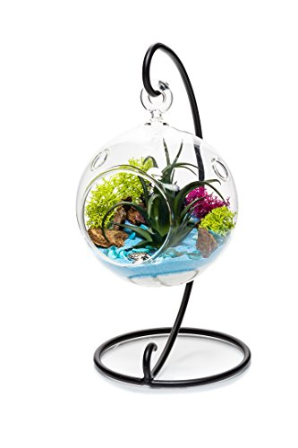 - Nautical Crush Trading Air Plant Terrarium Kit with Stand | Ocean Series Blue & Green | Complete Gift Set | 4