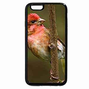 iPhone 6S / iPhone 6 Case (Black) Beautiful Chaffinch