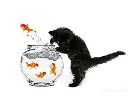 The Art Stop Photo Black Kitten CAT Goldfish Bowl Framed Print