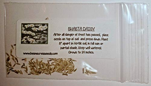 Shasta Daisy Seeds Party Favors, Wedding Favors, Showers, Gift Bag Fillers 50 Packs [Parahita Store]