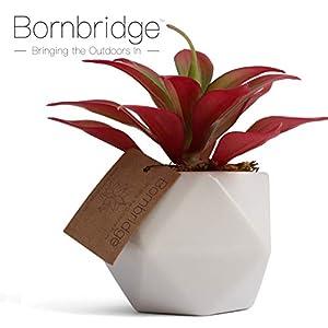 Bornbridge Artificial Succulent - Fake Succulent in Planter - Faux Succulent with Ceramic Geometric Planter - Artificial Potted Plant 2