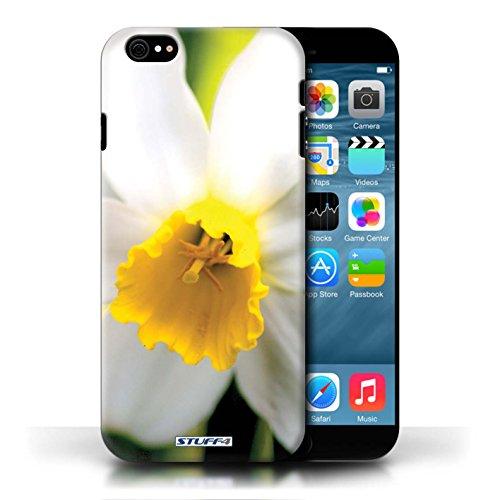 Etui / Coque pour Apple iPhone 6/6S / Fleur blanche conception / Collection de floral Fleurs