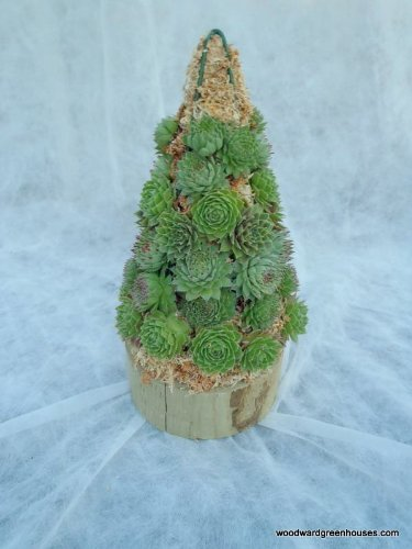 Christmas-Tree-Cone-Sphagnum-Moss-Topiary-Form