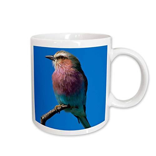 - 3dRose Danita Delimont - David Wall - Birds - Lilac-breasted, Roller Coracias caudatus, Hwange NP, Zimbabwe, Africa - 15oz Two-Tone Blue Mug (mug_187845_11)