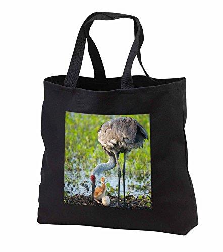 Price comparison product image Danita Delimont - Sandhill Crane - Just hatched, Sandhill Crane rotating second egg, Florida - Tote Bags - Black Tote Bag 14w x 14h x 3d (tb_250760_1)