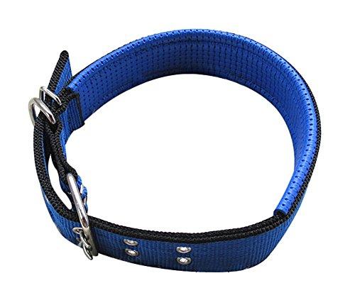 Freerun Pet Dog Collars Adjustable Sizes Durable Nylon Seafoam Collar - Blue, XXL