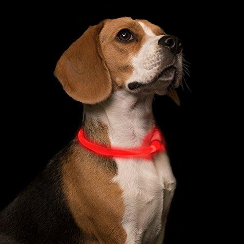 - GlowCity Light Up LED Fiber Optic Dog Neckalace - Red