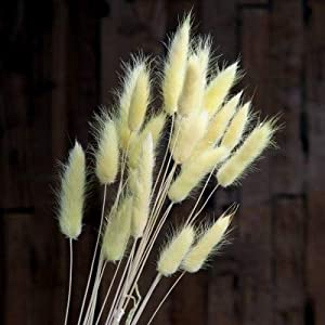 ShineBear Natural 20pcs Dried Flower Rabbit Tail Grass Foxtail Dog Tail Grass Branch DIY Flowers Wedding Decoration for Home Party Office – (Color: Yellow)