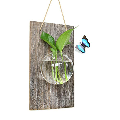 - Wall Hanging Hydroponic Plant Glass Vase,Wall Hanging Fish Tank,Multi-Styling Transparent Glass Planter for Home Office Living Room Decor