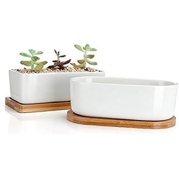 Amazon Com Greenaholics Succulent Plant Pots 6 Inch