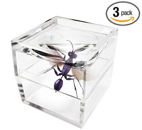 MagniPros Pack of 3 Magnifier Box Bug Viewer Magnifies up to 5X(500%) with Crystal Clear - Box Insect