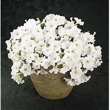 Petunia-Spreading Easy Wave White 100 seeds