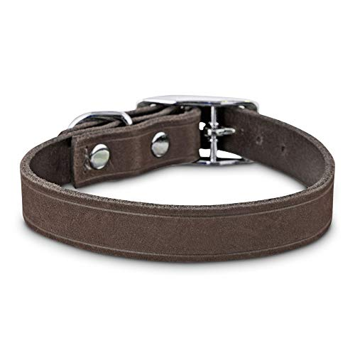 (Bond & Co. Gray Suede Dog Collar, X-Small/Small)