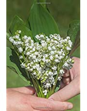 A Bouquet of Lily of the Valley Flowers For You Journal: 150 Page Lined Notebook/Diary/Journal