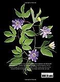 Scentual Garden: Exploring the World of Botanical