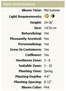 Stargazer Oriental Lily (12 bulbs)